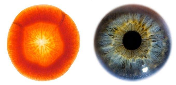 ces-aliments-ressemblent-aux-organes-quils-guerissent-carotte-yeux