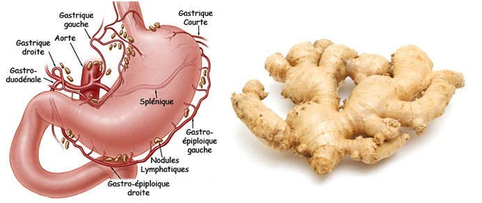 Ginger and stomach