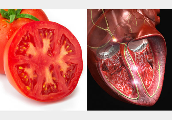Tomato and heart