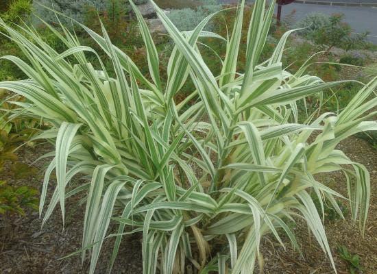 ces plantes dans votre maison