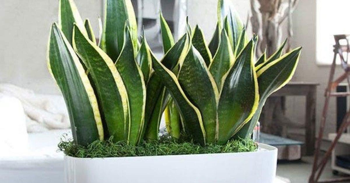ces plantes purifient lair en 6 heures 1