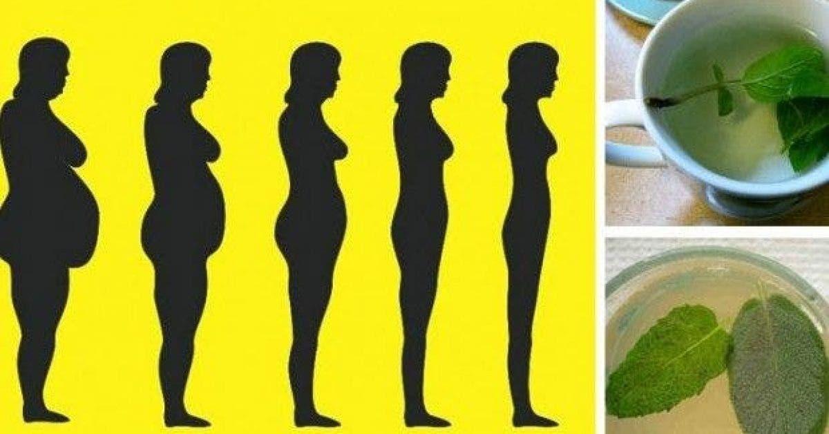ces plantes qui stimulent la digestion aident a eliminer les toxines et facilitent la perte de poids 1