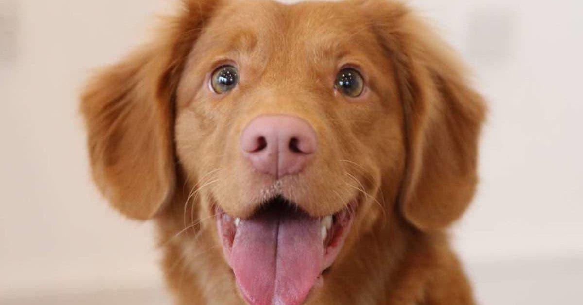 cest-moi-ou-ton-chien---une-femme-demande-a-son-petit-ami-de-choisir-avec-qui-il-veut-vivre
