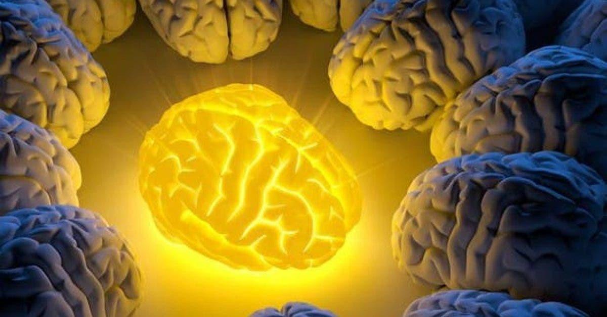 cette epice regenere les cellules endommagees du cerveau 1