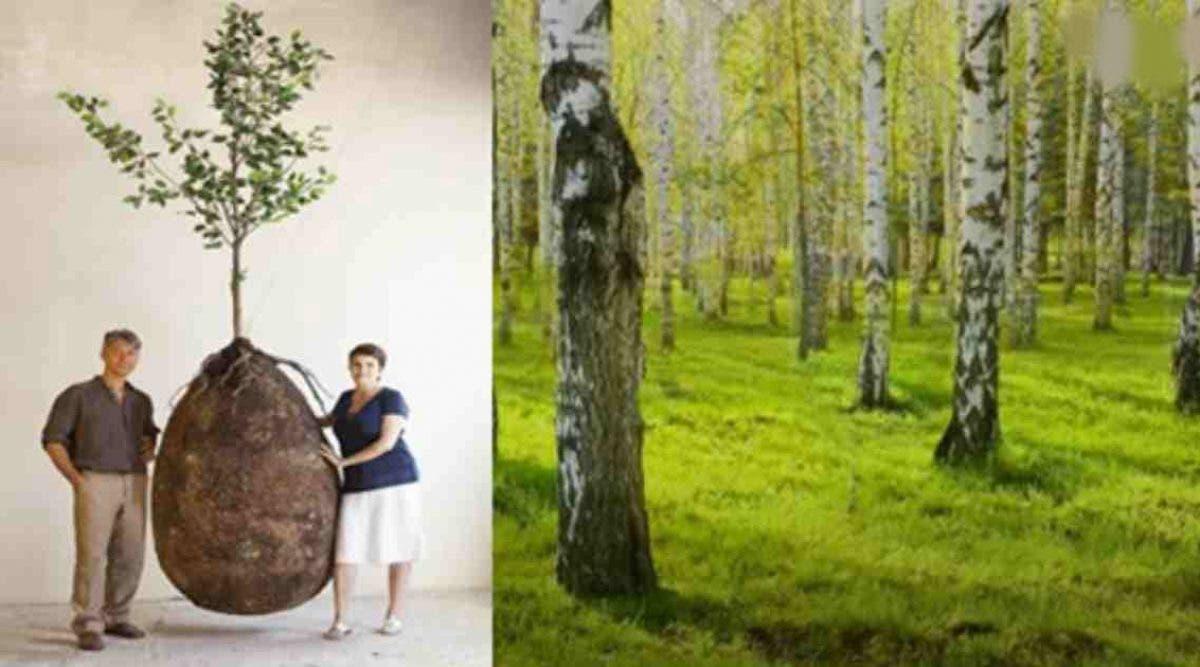 cette-nouvelle-capsule-vous-fait-devenir-un-arbre-apres-la-mort