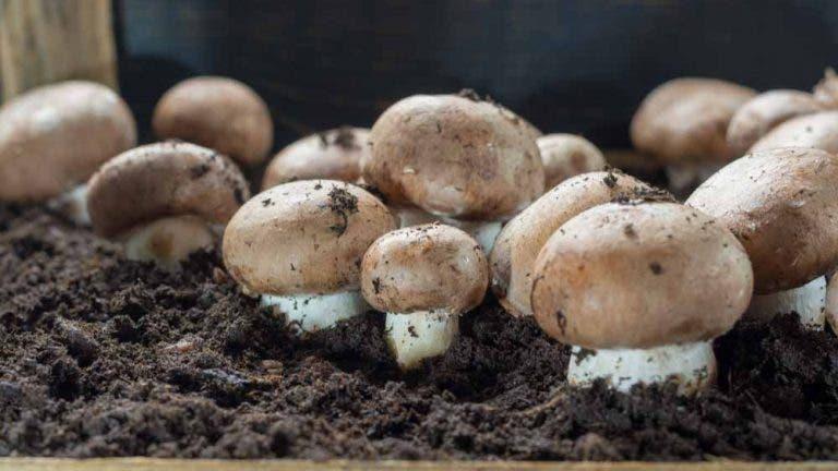champignons 2