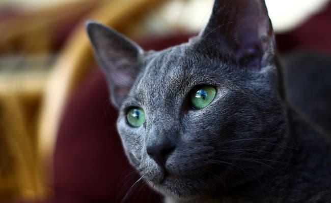Les chats protègent votre maison
