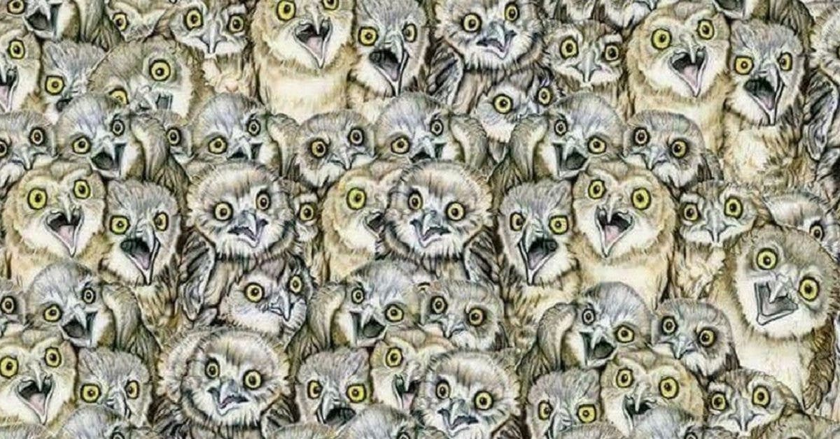 Un chat se cache dans cette photo, pouvez-vous le trouver ?
