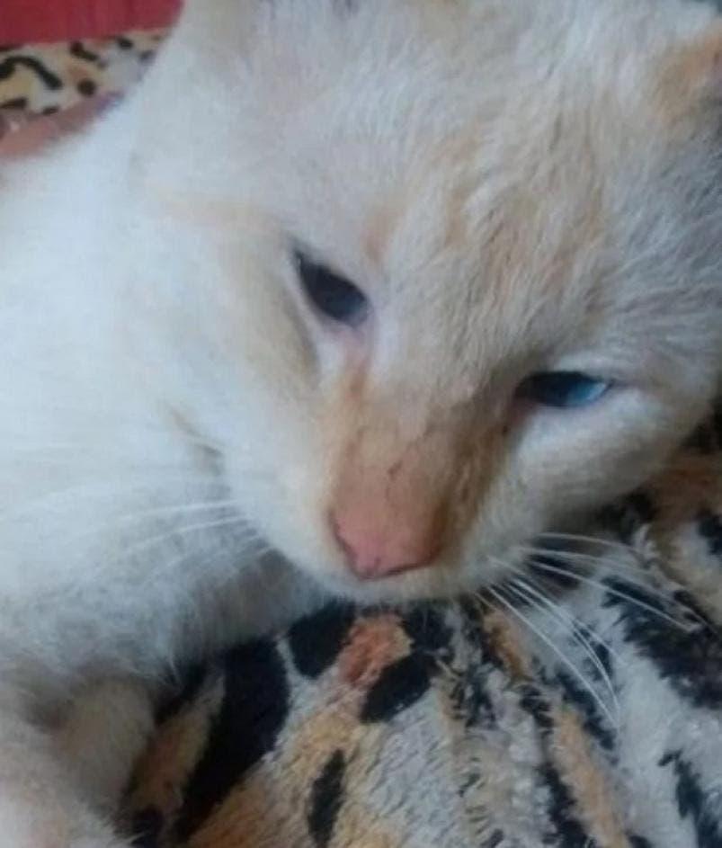 chat de daniela