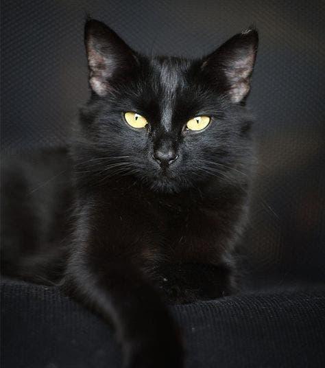 Le chat noir apporte prospérité