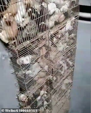 chats en cage2
