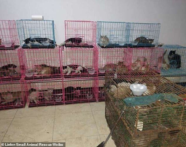 chats en cage4
