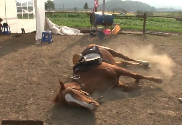 cheval fait le mort