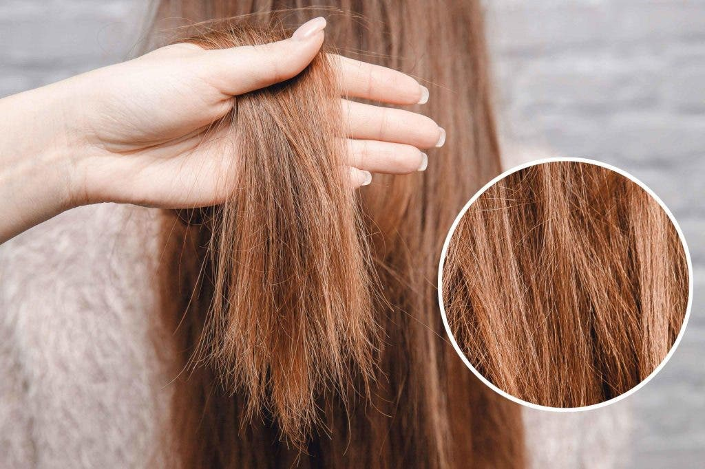 cheveuxfourchus