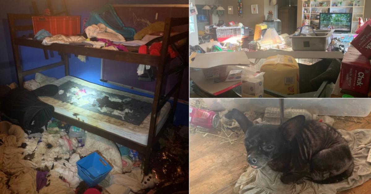 La police découvre des enfants vivant dans une maison insalubre avec 245 animaux