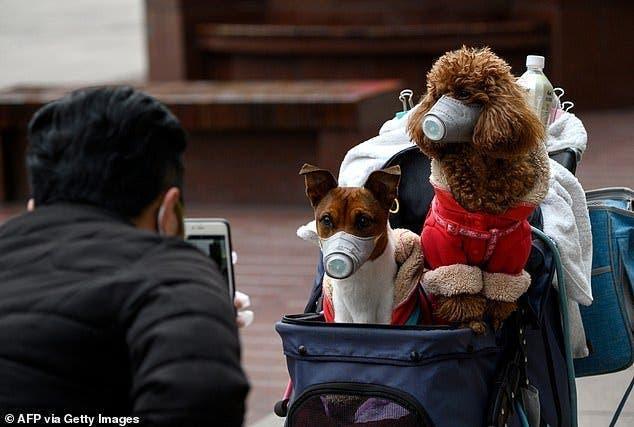 Le premier chien victime du coronavirus vient de mourir