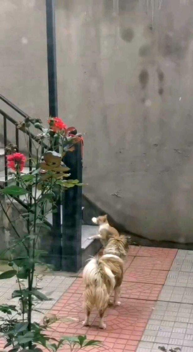 chien partage nourriture avec chat-1