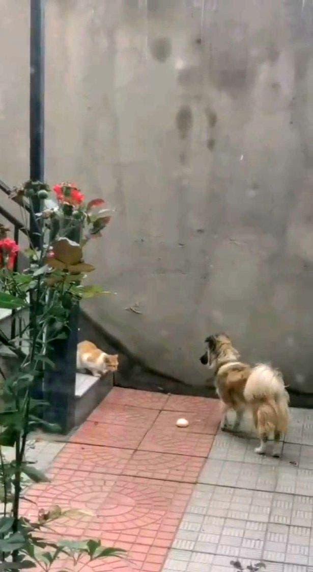 chien partage nourriture avec chat