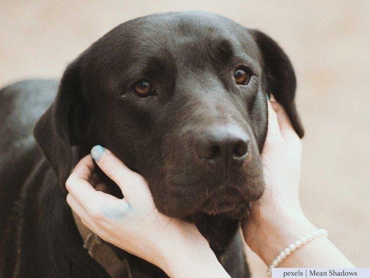Les vétérinaires révèlent ce que les animaux font juste avant la mort