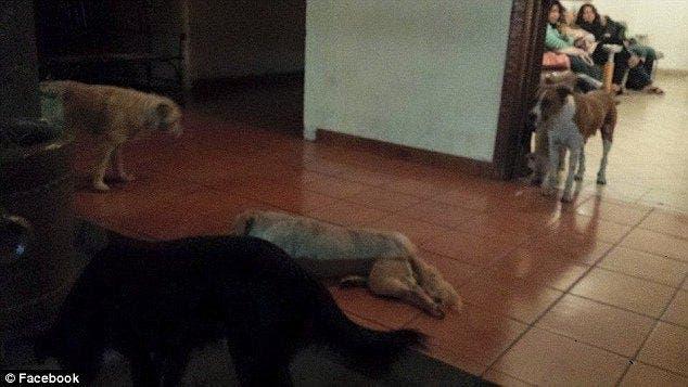 Des chiens errants sont venus aux funérailles d'une vieille dame pour lui rendre hommage