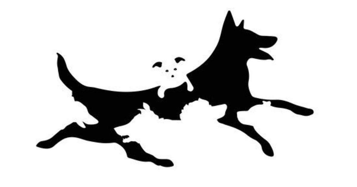 Combien de chiens voyez-vous sur l'image ? Le nombre révélera votre âge mental