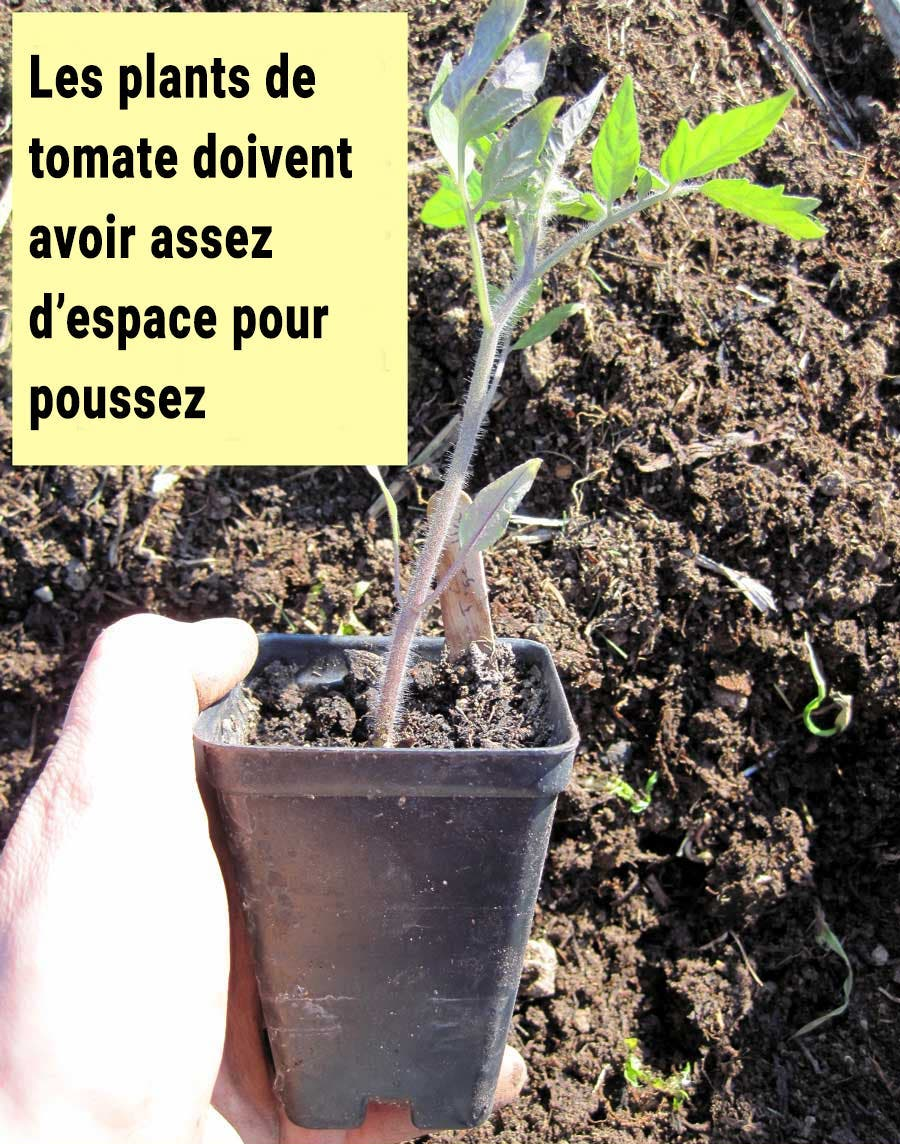 choisir entre semer grainer ou acheter plants