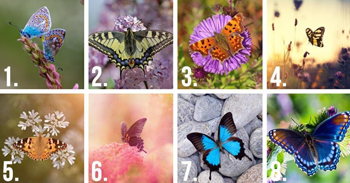 choisissez le plus beau papillon et decouvrez les secrets sur votre personnalite 1