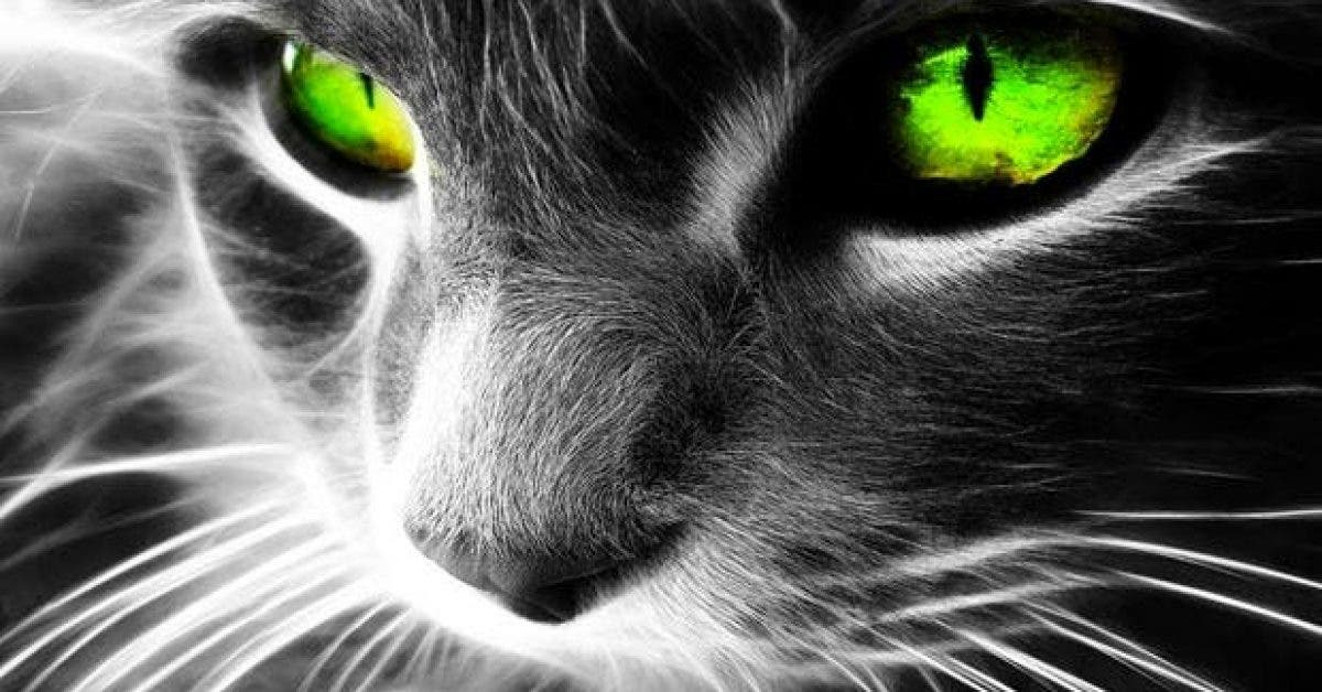 cinq capacites psychiques des animaux que les humains nont pas11