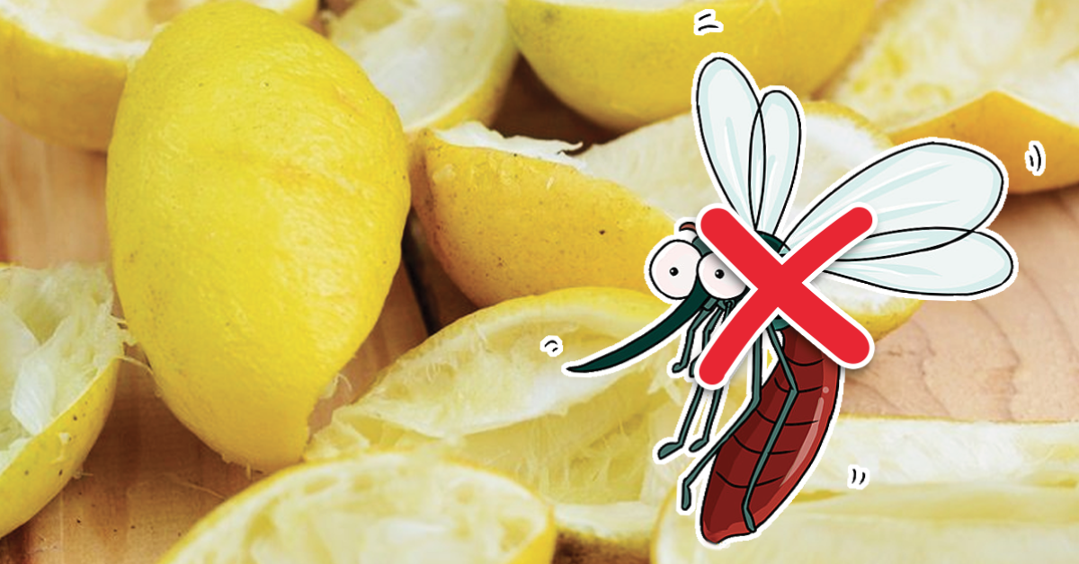 Une astuce de génie au citron pour éliminer les insectes de la maison