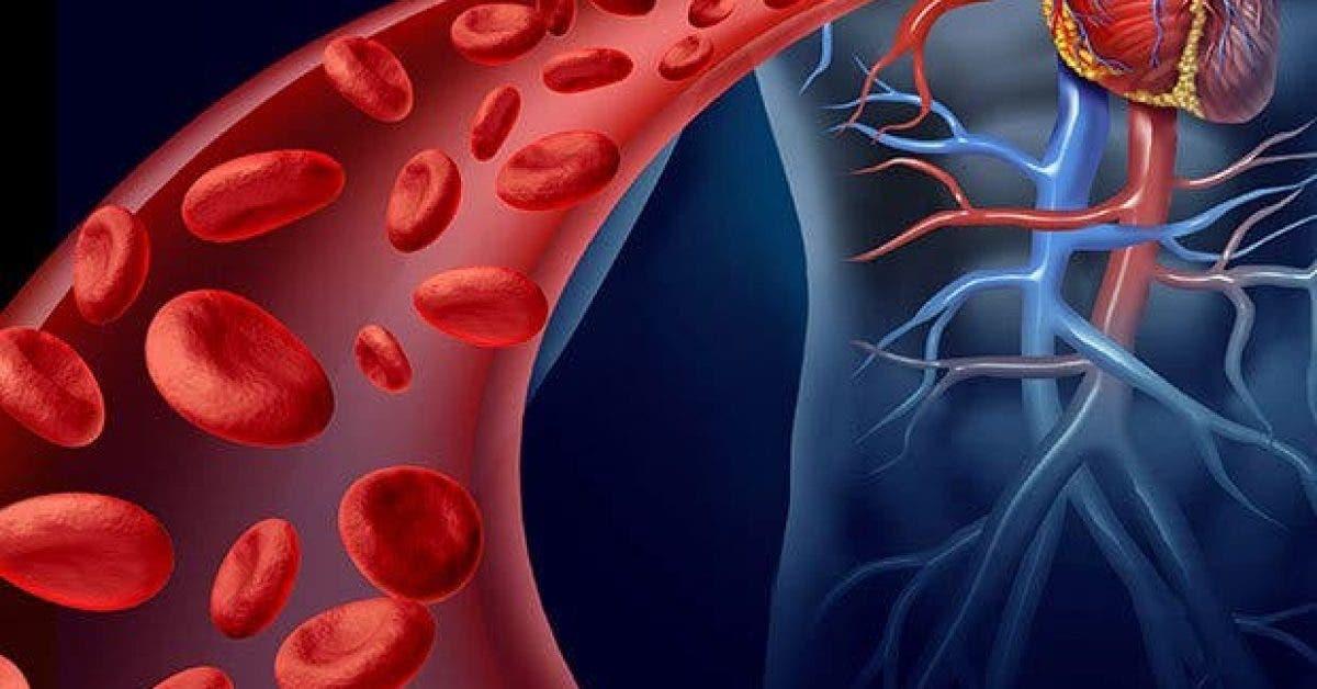 comment ameliorer circulation sanguine naturellement11