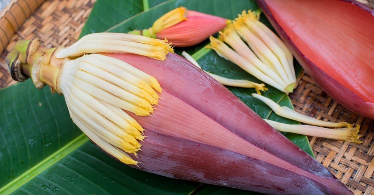 comment-consommer-les-fleurs-de-bananes