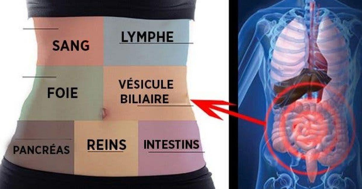 comment detoxifier chaque organe pour ne plus etre malade ou fatigue 1