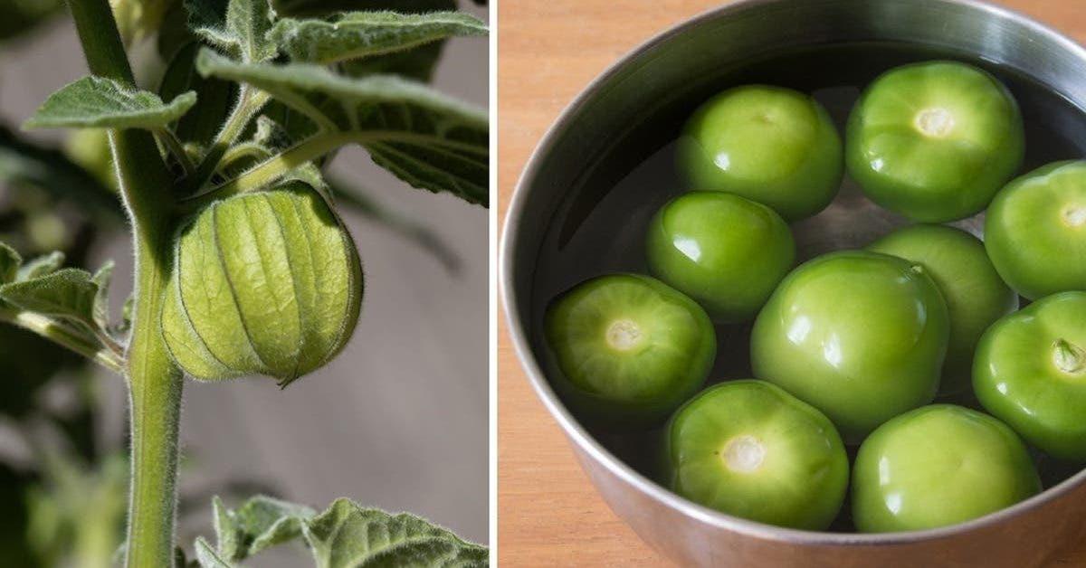comment faire pousser des tomates vertes a la maison 1