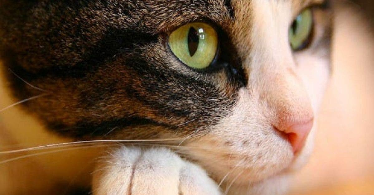 comment les chats voient des choses invisibles 1