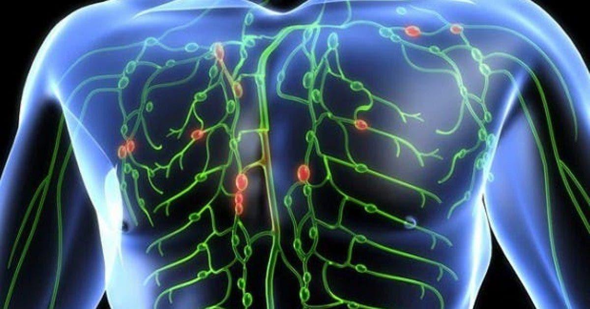 comment nettoyer votre systeme lymphatique et combattre 80 des maladies chroniques 1