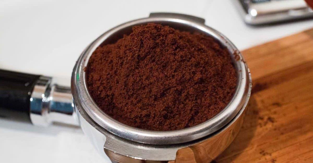 comment-se-debarrasser-des-moustiques-facilement-grace-au-marc-de-cafe