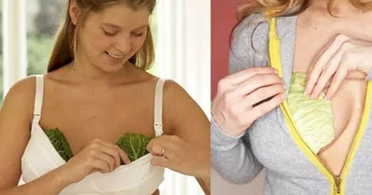 comment utiliser le chou contre les seins engorges 1