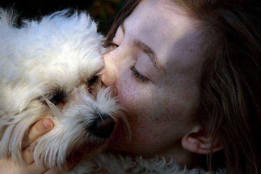 Perdre un chien peut être aussi difficile que perdre un être cher d'après des études