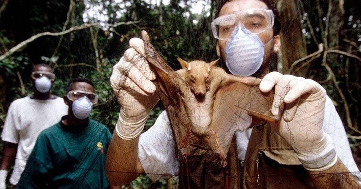 coronavirus-ce-nest-pas-la-derniere-pandemie-a-laquelle-nous-allons-etre-confrontes-alertent-des-scientifiques
