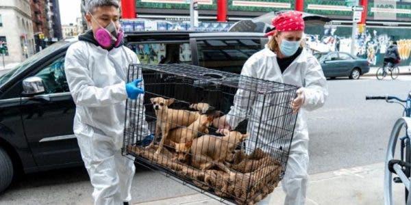 coronavirus-voila-ce-qui-arrive-aux-animaux-de-compagnie-quand-leurs-proprietaires-meurent