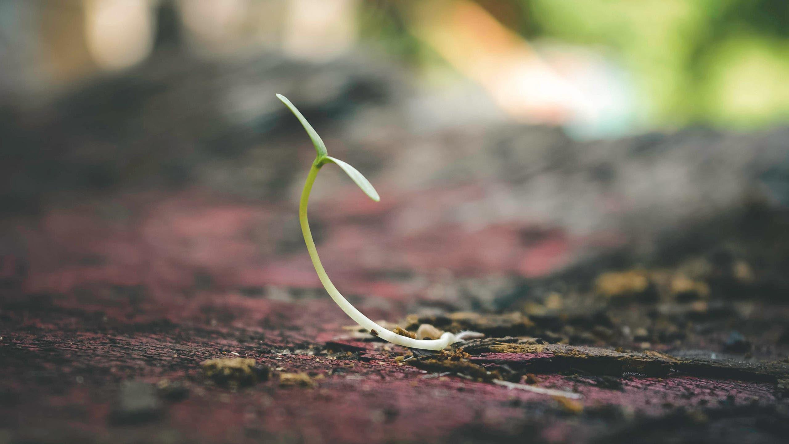 croissance des plantes