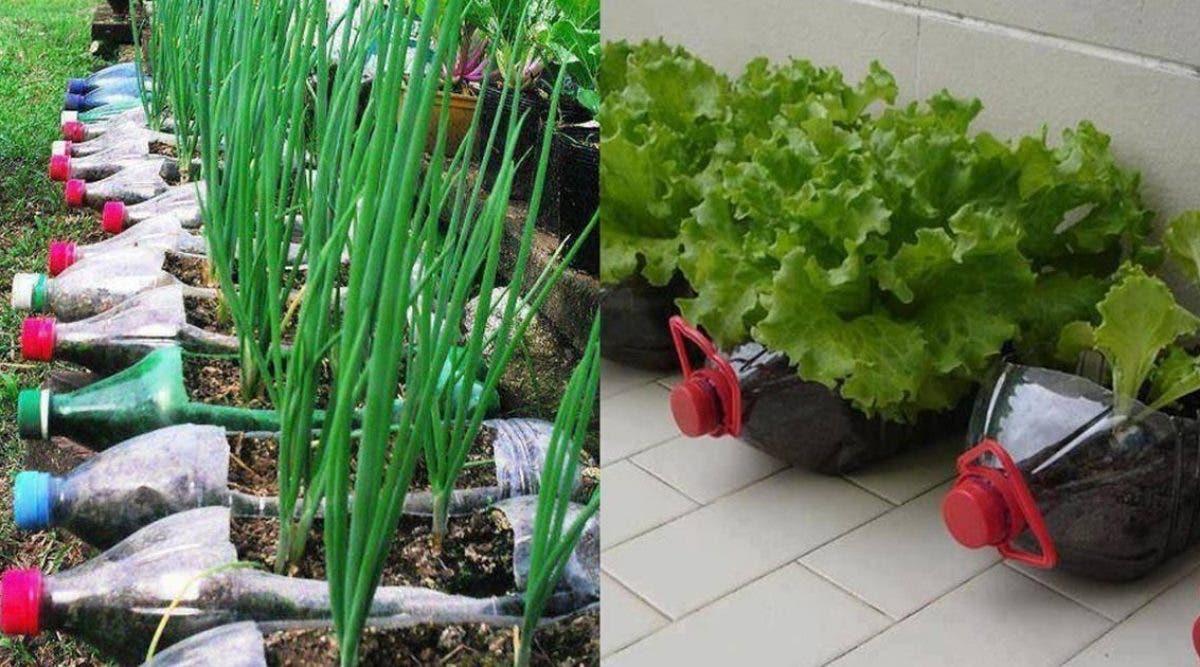 cultivez-12-aliments-avec-de-simples-bouteilles-en-plastique