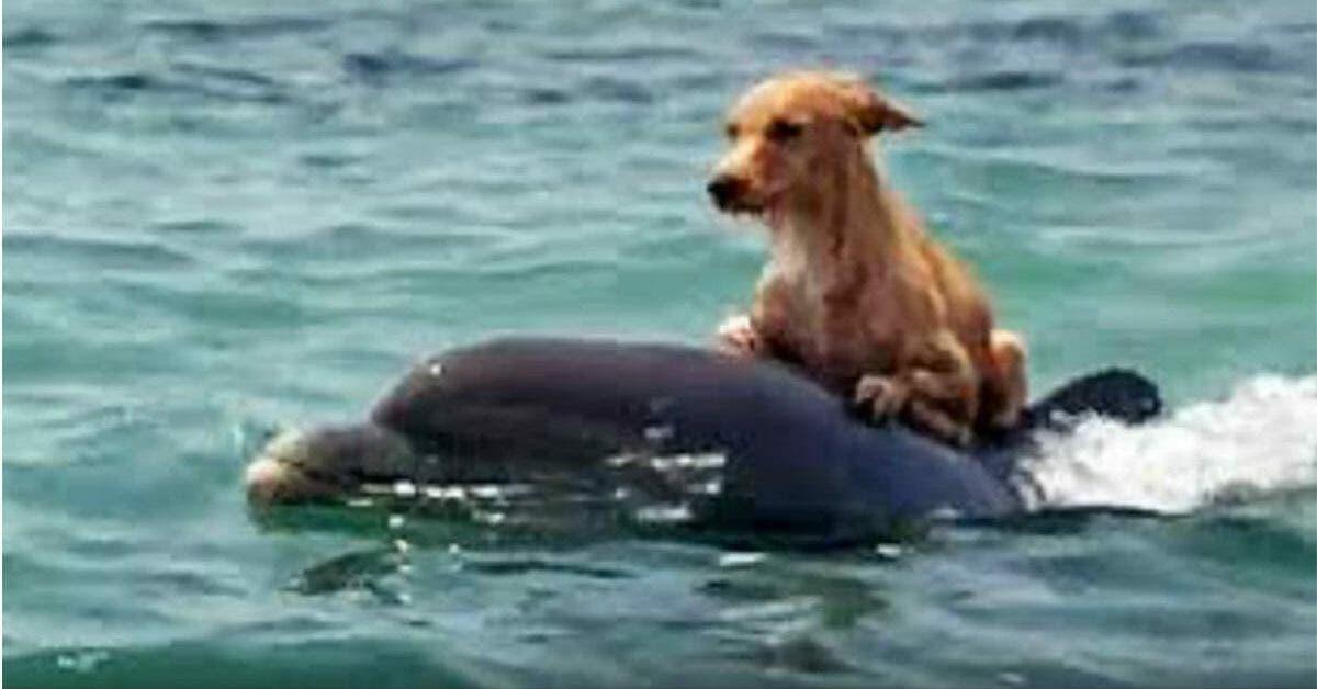 decouvrez lhistoire du chien qui a ete sauve de la noyade par des dauphins 1