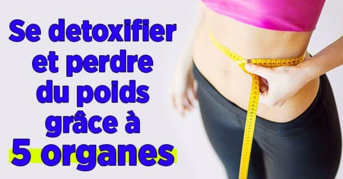 detoxifier perdre poids grace organes 1