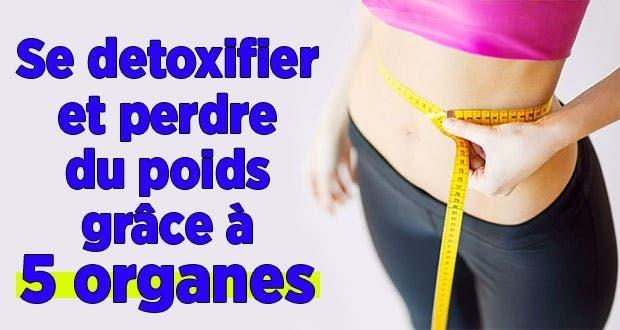 Organe qui fait perdre du poids