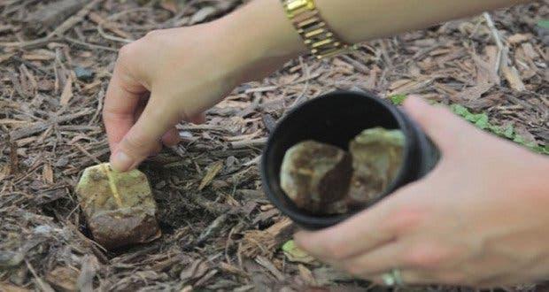 planter un sachet de thé