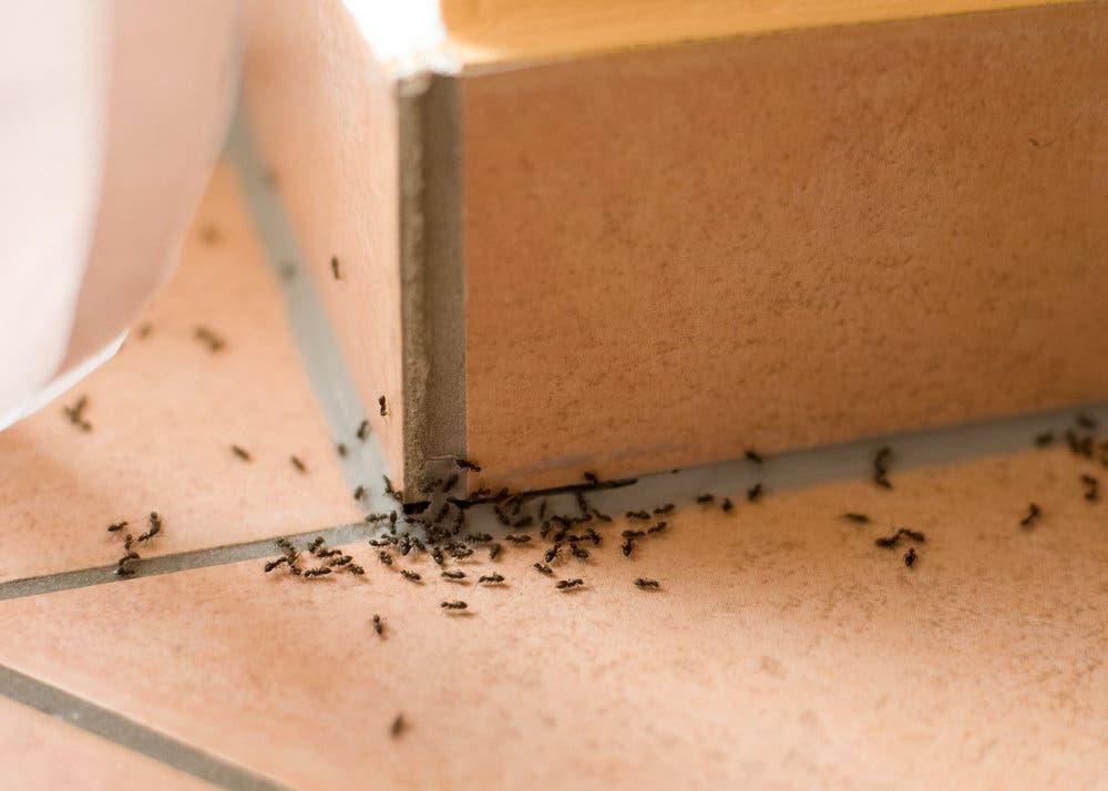 eloigner fourmis