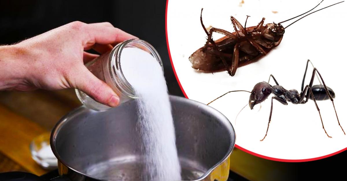 eloigner-les-puces-les-fourmis-et-les-cafards-hors-de-chez-vous-avec-12-astuces-simples