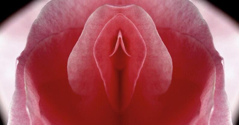 erection clitoris