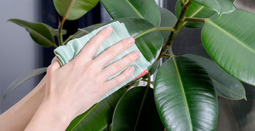feuilles plantes